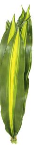 巴西叶 (10枝/扎)