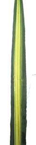 绿剑叶 (10枝/扎)