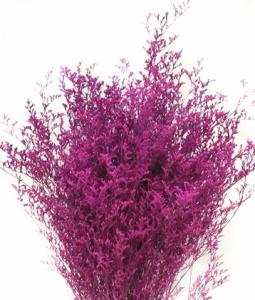 染紫情人草 (0.5KG/扎)