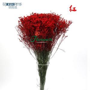 红色水晶草 (0.5KG/扎)