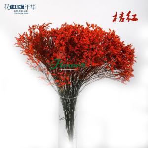 桔红水晶草 (0.5KG/扎)