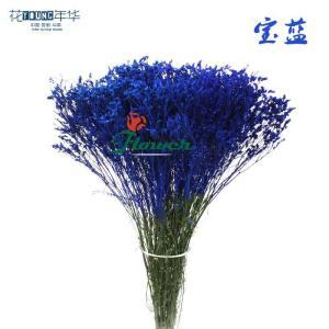 宝蓝水晶草 (0.5KG/扎)