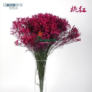 桃红水晶草 (0.5KG/扎)