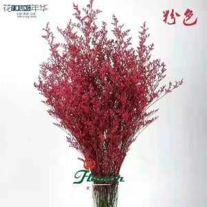 粉色情人草 (0.5KG/扎)