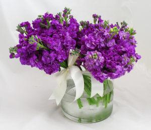 深紫紫罗兰