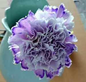 染色彩康紫色