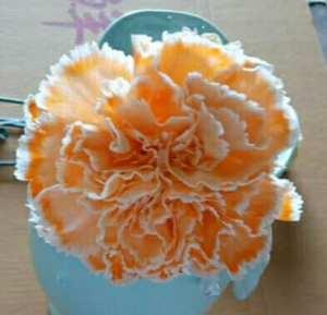 染色彩康橙色