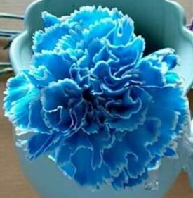 染色彩康蓝色