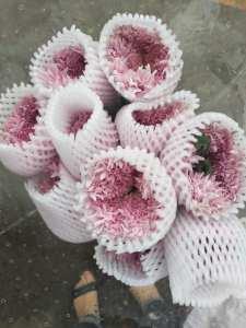 粉色面包菊