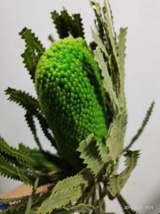 绿色贝雷斯