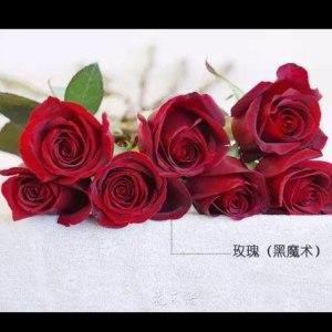 黑玫 (20枝/扎)
