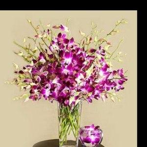 紫洋兰 (12枝/扎)