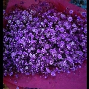 吸色深紫千万星