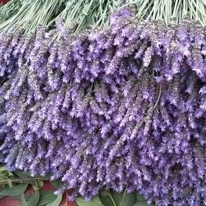 薰衣草鲜花(紫日) (若干枝/扎)