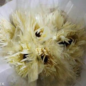 白拉丝非洲菊