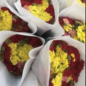 咖喱花 (10枝/扎)