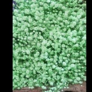 喷色绿色千万星