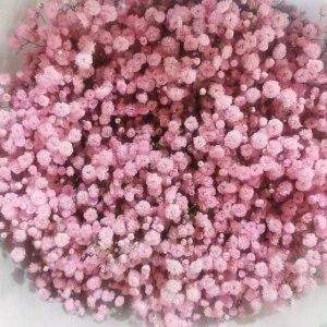 喷色粉色千万星