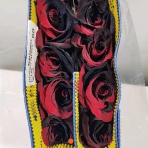 厄瓜多尔染色玫瑰-黑红 (10枝/扎)