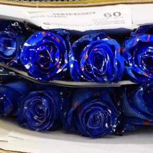 厄瓜多尔染色圣诞玫瑰-蓝色 (10枝/扎)