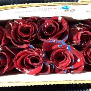 厄瓜多尔染色圣诞玫瑰-红色 (10枝/扎)