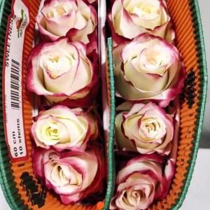 厄瓜多尔玫瑰-甜心 (10枝/扎)