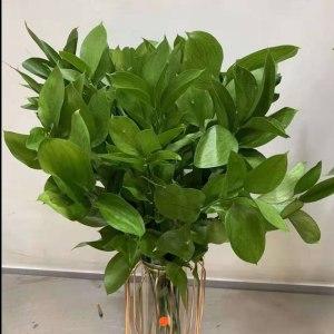 桔叶-绿色 (10枝/扎)