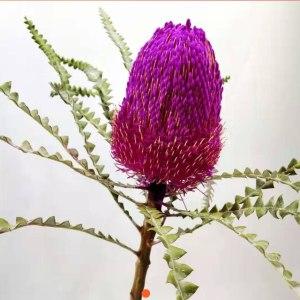 南非佛塔-紫色