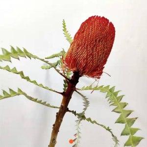 南非佛塔-红色