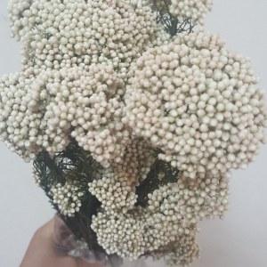 白色米花 (若干枝/扎)