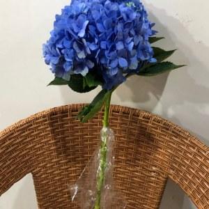 绣球-海蓝