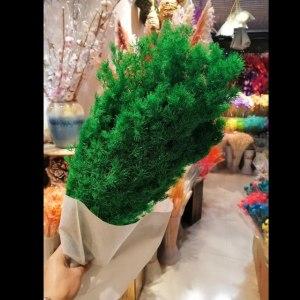 永生绿色蓬莱松 (若干枝/扎)