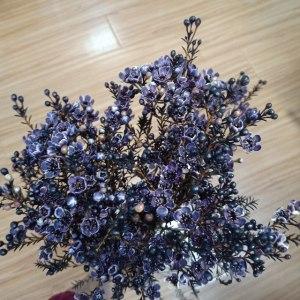 平头腊梅紫色
