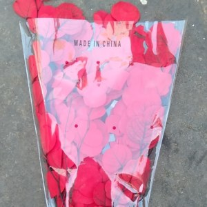 永生尤加利-红色