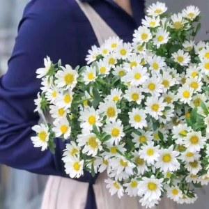 迷你菊-白色
