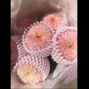 乒乓菊浅粉色