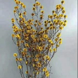 永生虎眼-黄色