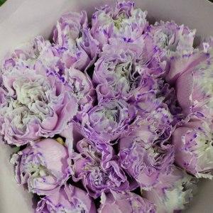 马卡龙康···紫