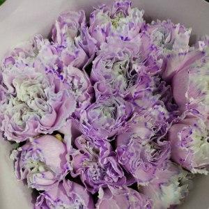 马卡龙···紫