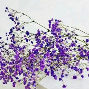 喷色紫色千万星