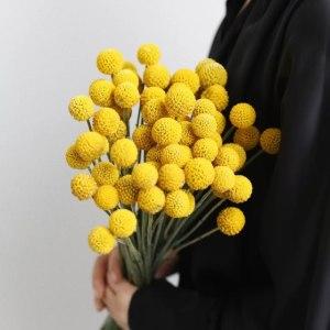 黄金球 (10枝/扎)