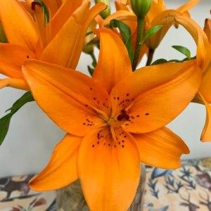 橙色梦想二头百合