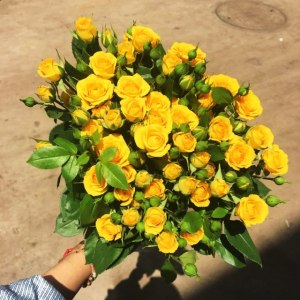 多头玫瑰黄金甲