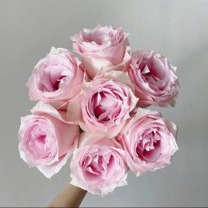 单头粉钻玫瑰 (20支/扎)