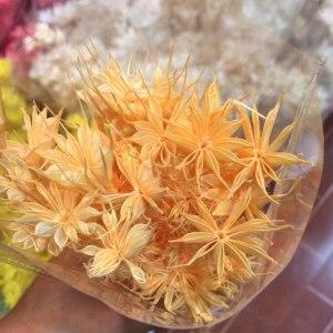永生八角花--橙色
