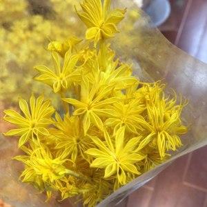 永生八角花--黄色