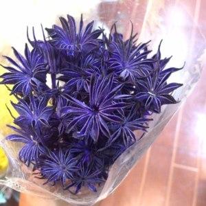 永生八角花--紫色